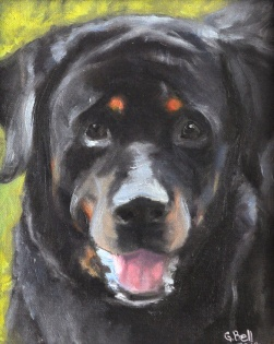 Amos, beloved Rottweiller